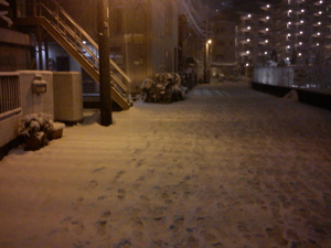 1007、雪に埋もれる
